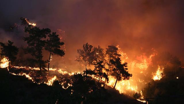 28 Temmuz'da başlayan orman yangınlarını 12 yaşındaki bir çocuğun çıkarttığı ortaya çıktı