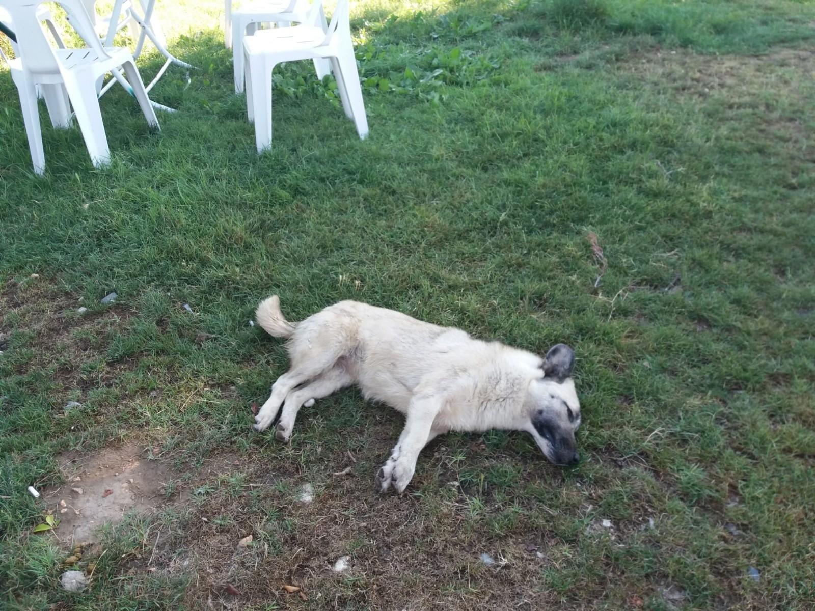 Antalya'nın Demre ilçesinde 14 sokak köpeği telef olmuş halde bulundu