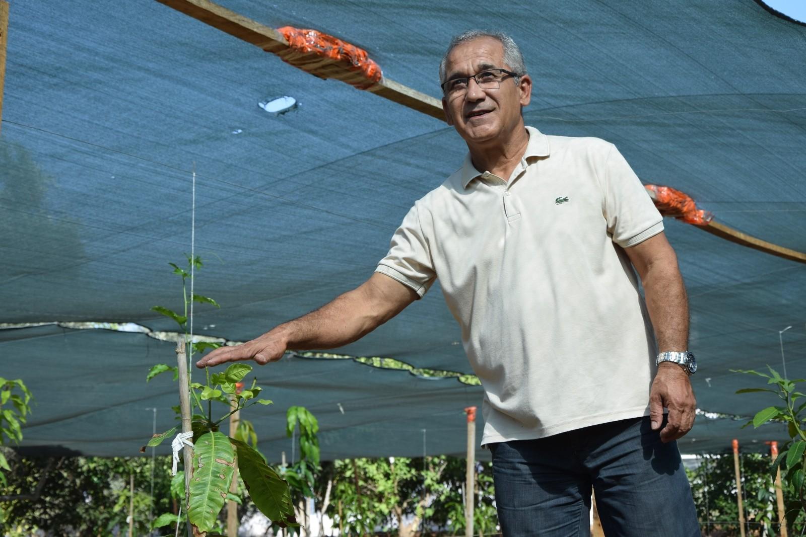 Emekli okul müdürü  hobi olarak başladığı bahçesinde tropikal meyve yetiştiriyor