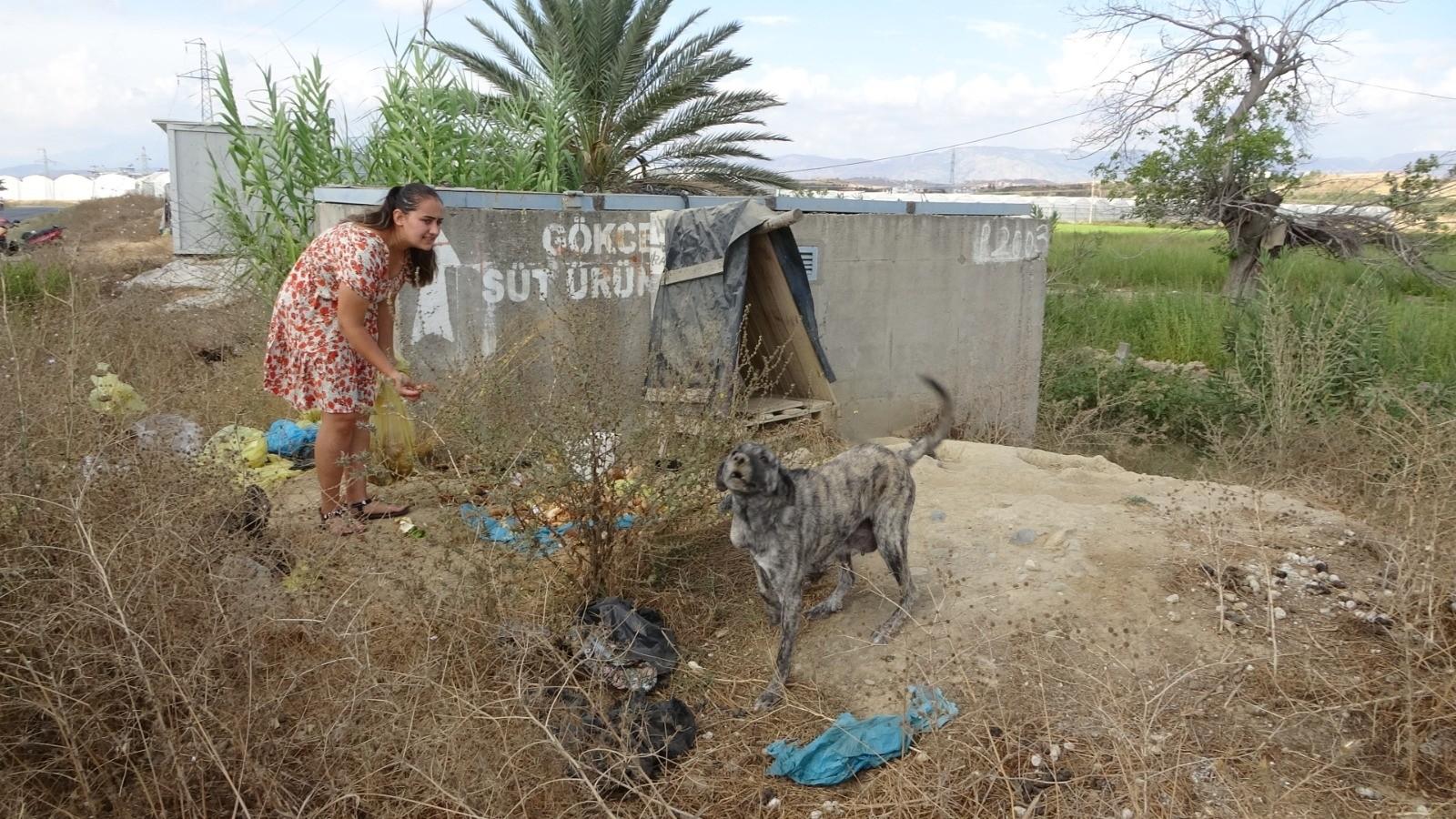 Garsonluk yapan 2 genç kadın çöpe atılan yemek atıklarıyla kedi ve köpekleri besliyor